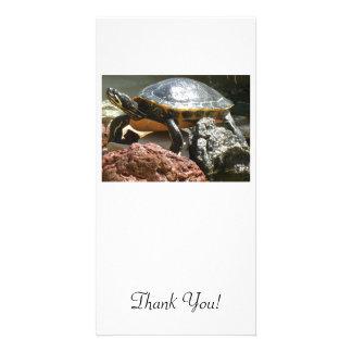 Turtle in Fish Tank Card