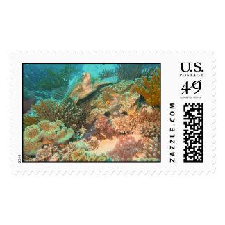 Turtle in the Reef Postage