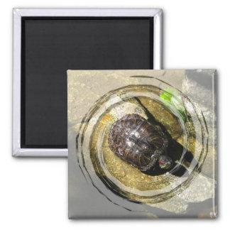 Turtle in the Sun Fridge Magnets