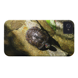 Turtle in the Sun iPhone 4 Case
