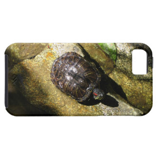 Turtle in the Sun iPhone SE/5/5s Case