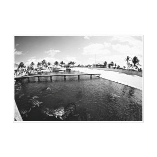 Turtle Lagoon Stretched Canvas Prints