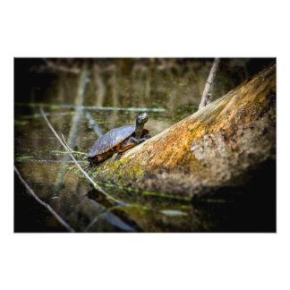 Turtle Log Photographic Print