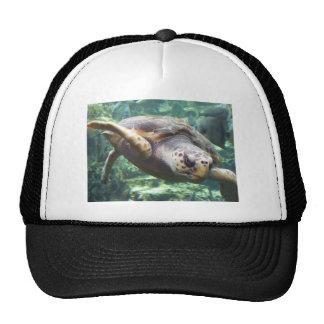 Turtle Love Trucker Hat
