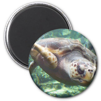 Turtle Love Magnet