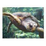 Turtle Love Post Card