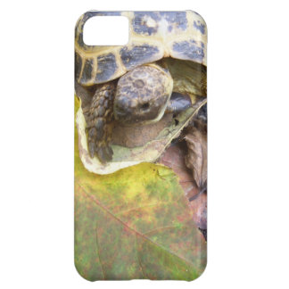 Turtle Lovers iPhone 5C Cover