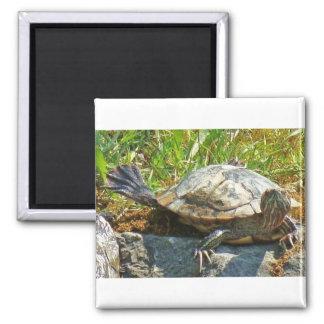 Turtle - Magnet