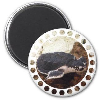 Turtle Magnet Fridge Magnets
