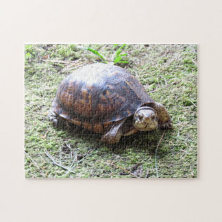 Turtle - Mossy Path Jigsaw Puzzle