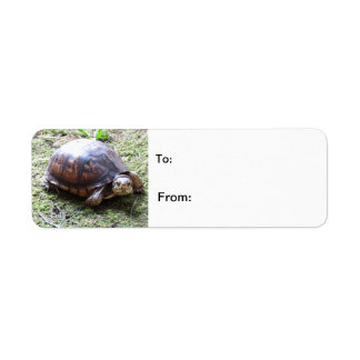 Turtle - Mossy Path Label