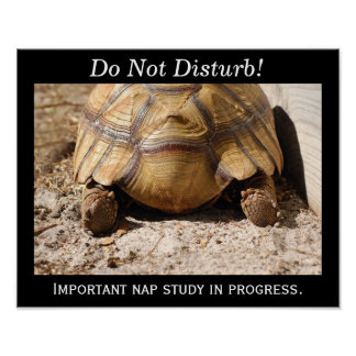 Turtle Nap! Poster