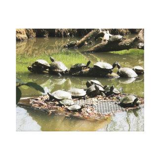 Turtle Network Canvas Print