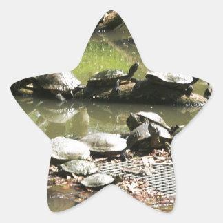Turtle Network Star Sticker