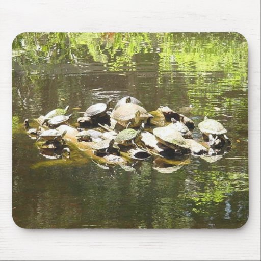 Turtle Networking... Mouse Mats