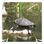 """Turtle on a Rock Invitation 5.25"""" Square Invitation Card"""