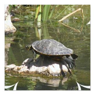 Turtle on a Rock Invitation