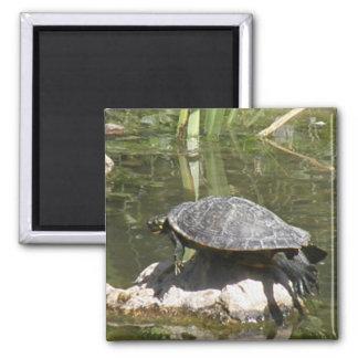 Turtle on a Rock Square Magnet Fridge Magnets