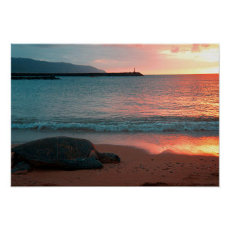 Turtle On A Sandy Tropical Beach At Sunset Poster