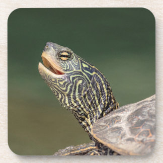 Turtle on LaChute River Beverage Coaster