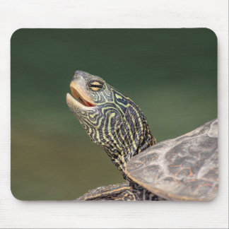 Turtle on LaChute River Mouse Pad