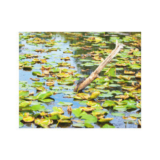 Turtle On Wood Canvas Print
