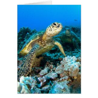 Turtle Pair Card
