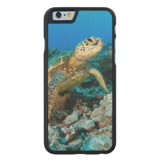 Turtle Pair Carved Maple iPhone 6 Case