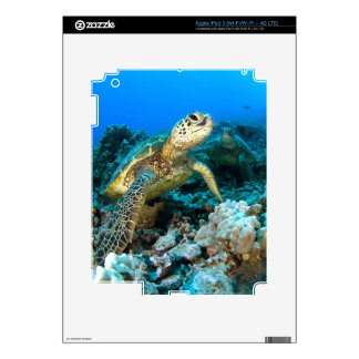 Turtle Pair iPad 3 Skins