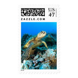 Turtle Pair Postage