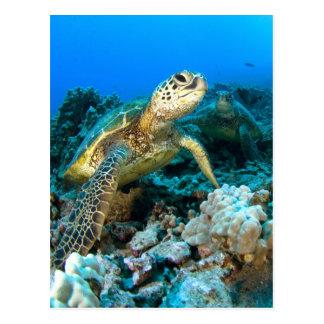 Turtle Pair Postcard