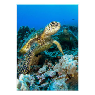 Turtle Pair Posters