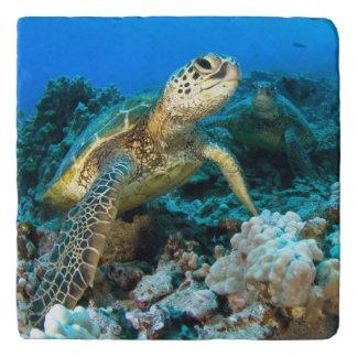 Turtle Pair Trivet