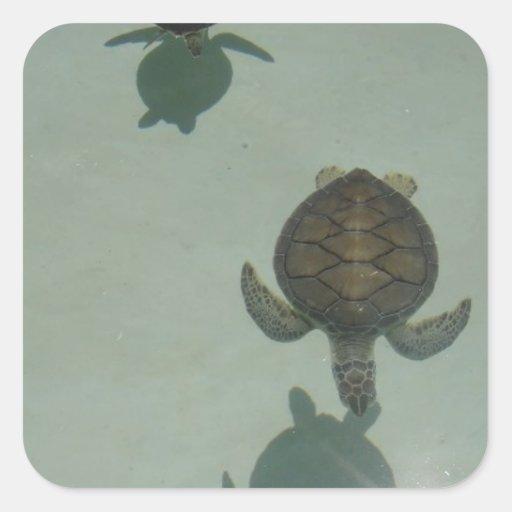 turtle pegatina cuadrada
