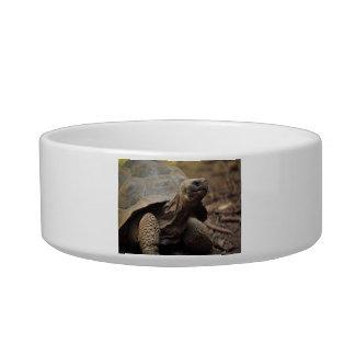 Turtle photo bowl