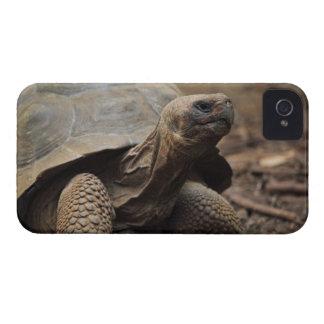 Turtle photo Case-Mate iPhone 4 case