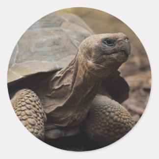 Turtle photo classic round sticker