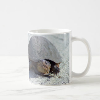 Turtle Photo Coffee Mug