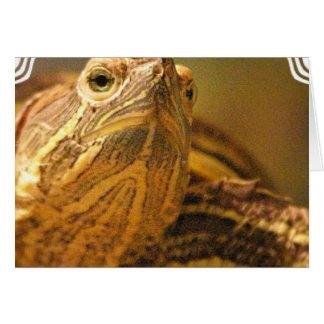 Turtle Photo Greeting Card