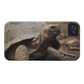 Turtle photo iPhone 4 covers