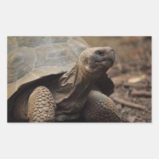 Turtle photo rectangular sticker