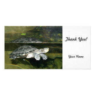 Turtle Photo Cards