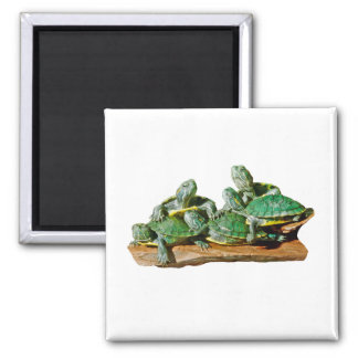 Turtle Picture Magnet