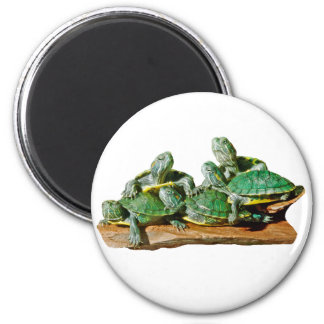Turtle Picture Refrigerator Magnets