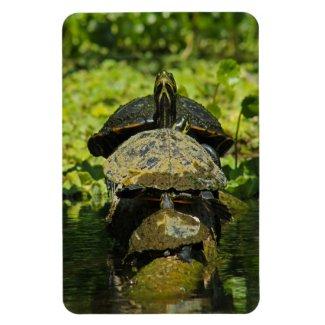 Turtle Pile Magnet