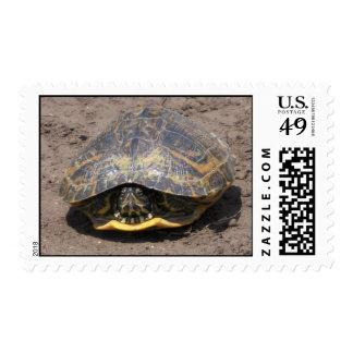 Turtle Postage Stamp