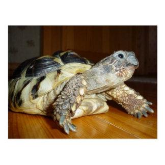 Turtle Postcards