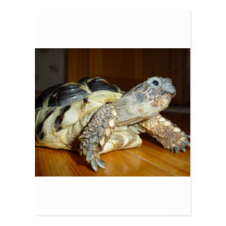 Turtle Post Cards