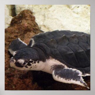 Turtle Poster Print