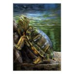 Turtle Posters